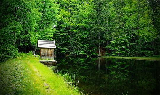 Grüne Waldlandschaft und See im Bayerwald