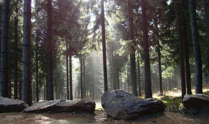 Freizeittipp  Den Bayerischen Wald erleben