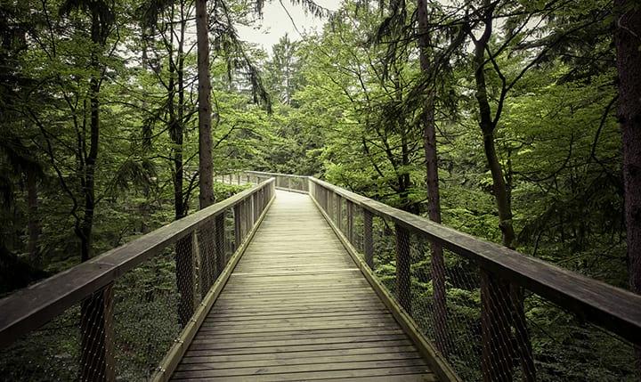 Freizeittipp  Wandern und Nordic Walking im Bayerwald