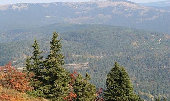 Die Hügel vom Bayerischen Wald nahe der Gemeinde