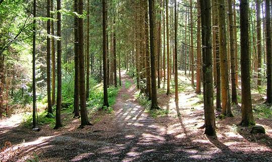 Bäume des Bayerwaldes in der Gemeinde