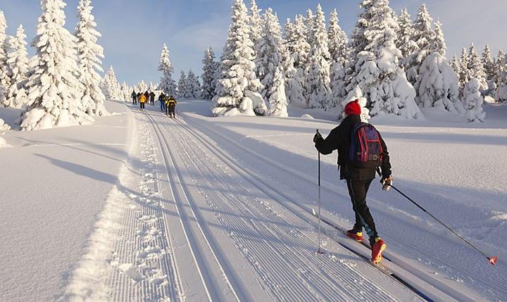 Freizeittipp  Langlauf im Bayerischen Wald