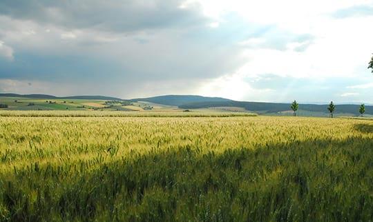 Weite Felder vor bevölktem Himmel
