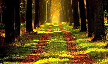 Angebot Wald(er)Leben - 5 UN